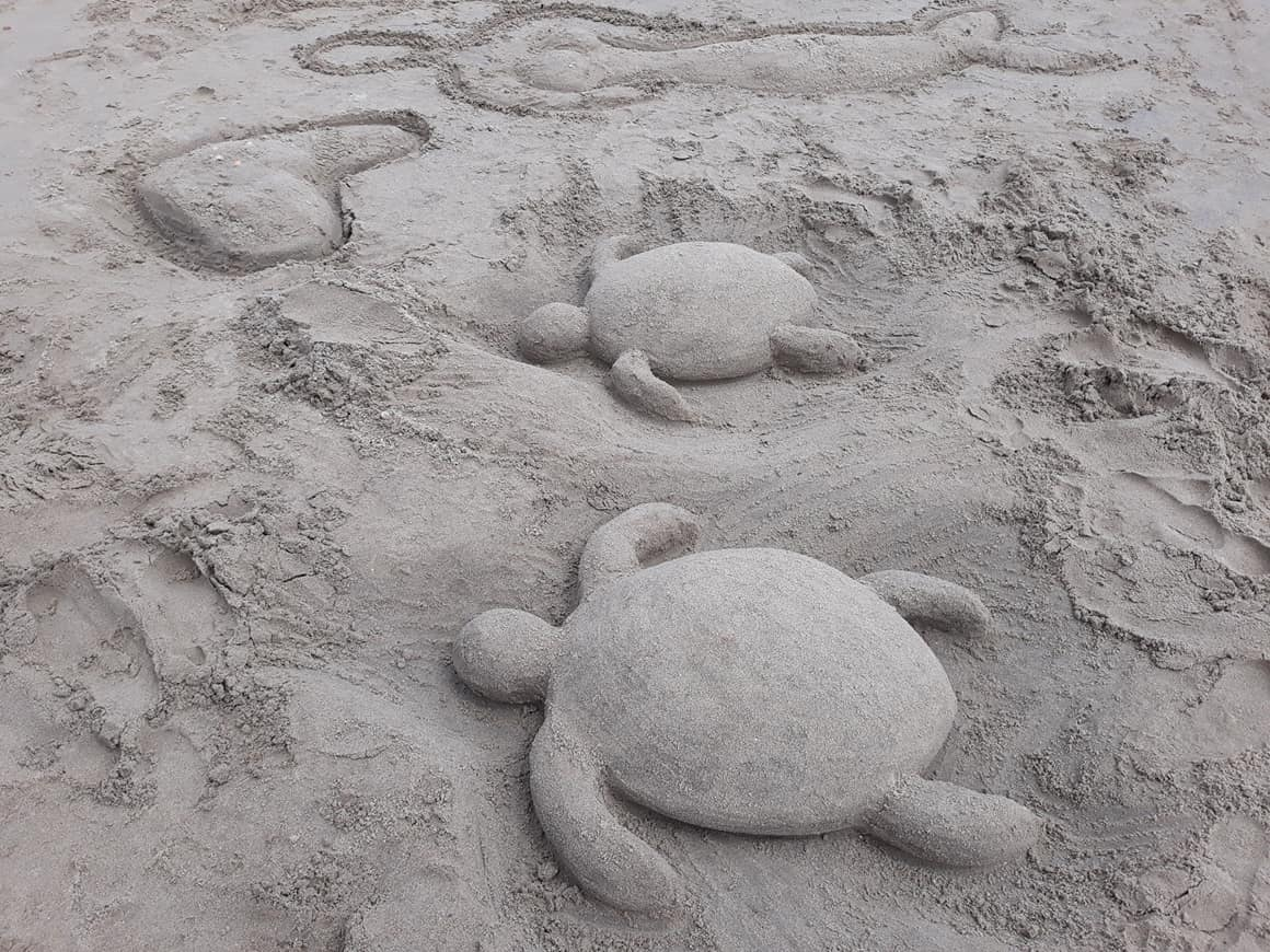 Sandcastle Competition Turtles