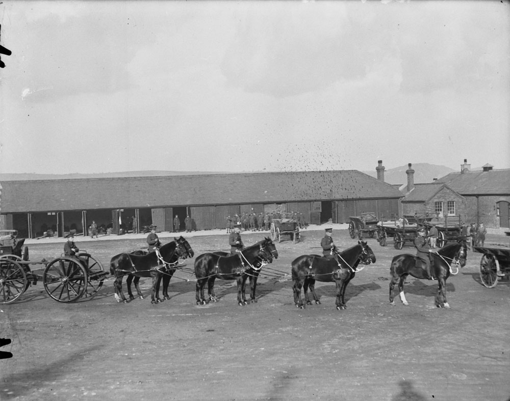 Shorncliffe's war horses