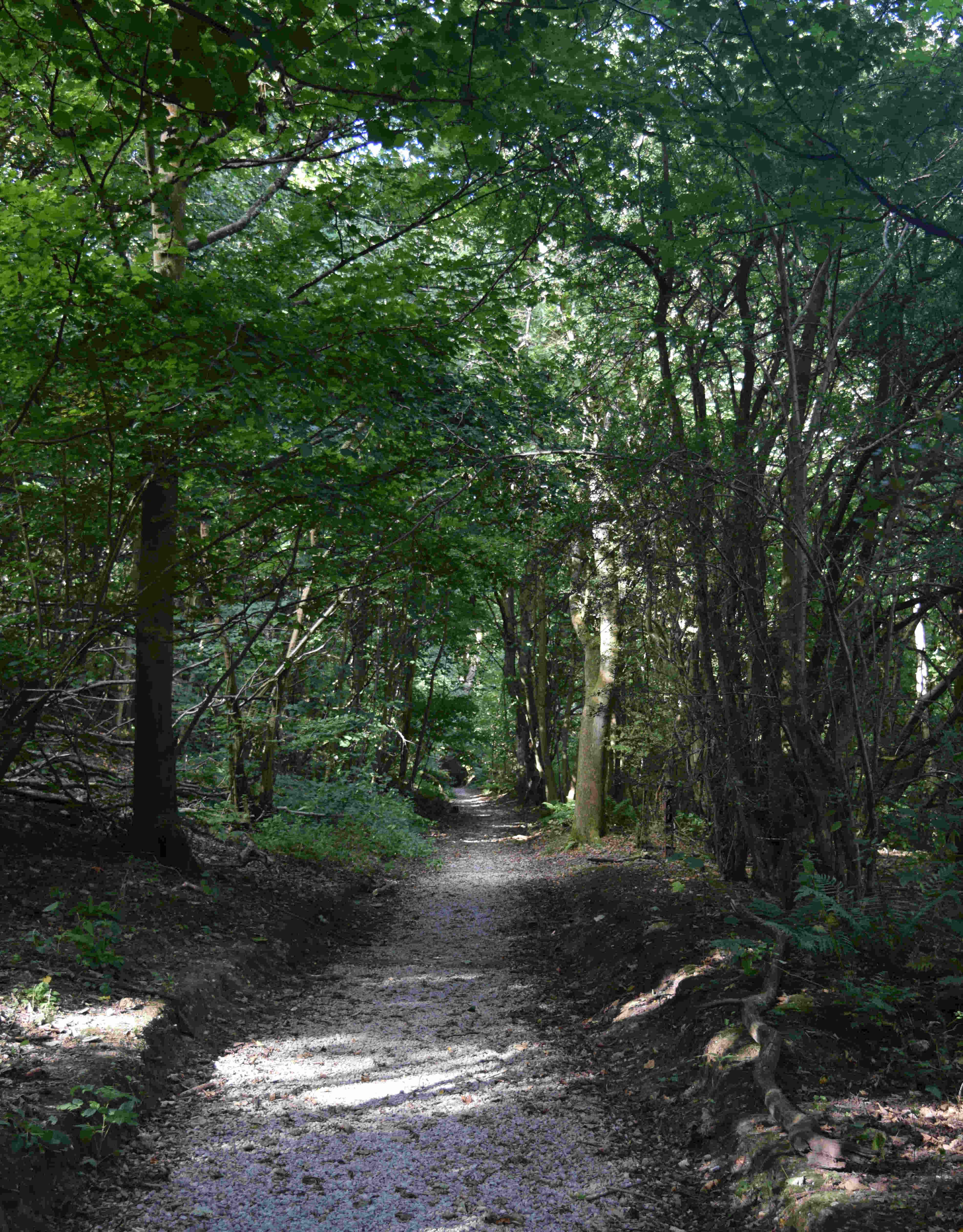 Shorncliffe Sandy Lane