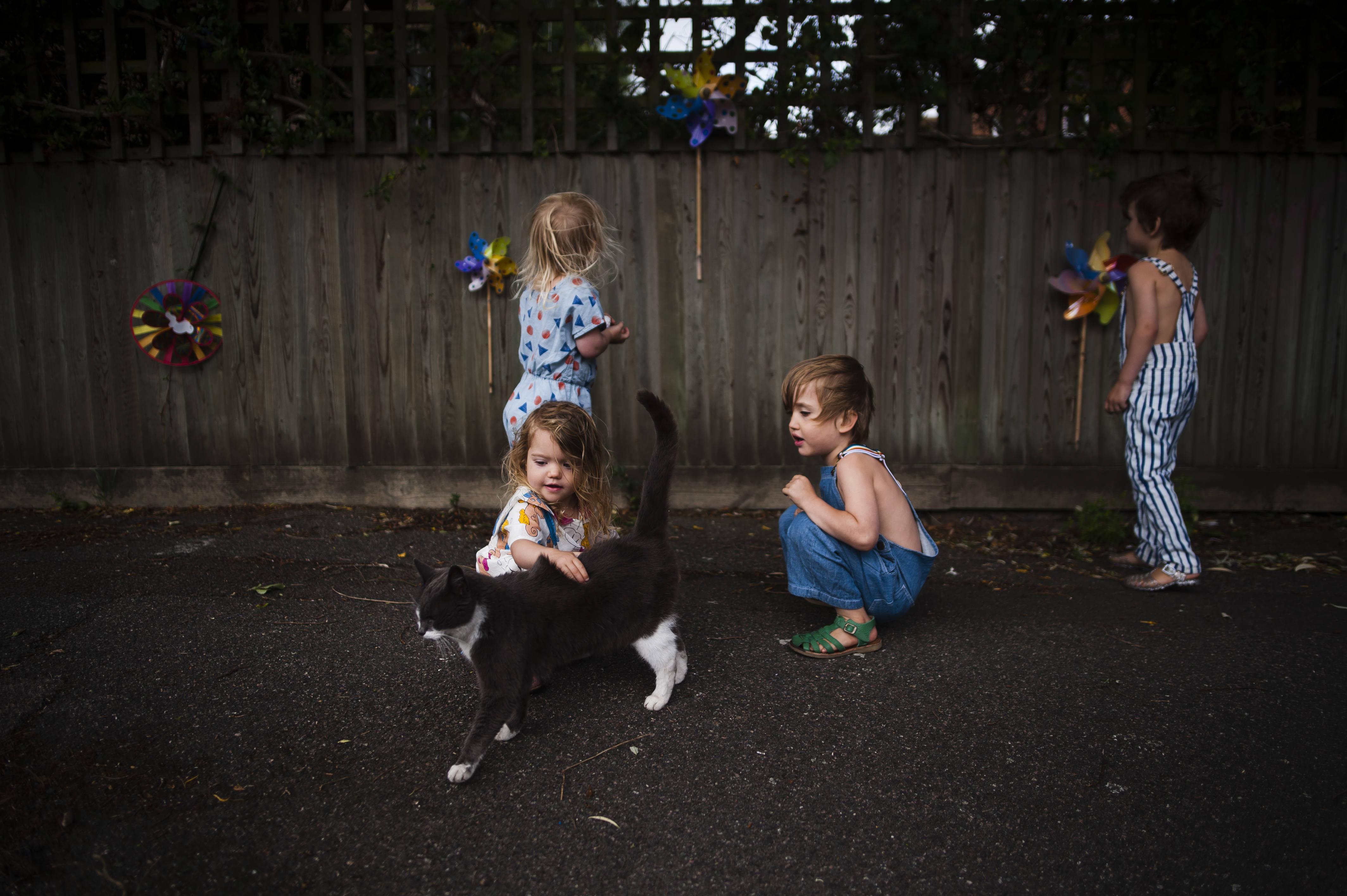 Cat Meet The Wildes