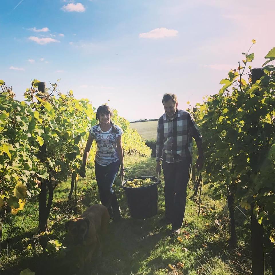 Family Harvest Terlingham Vineyard