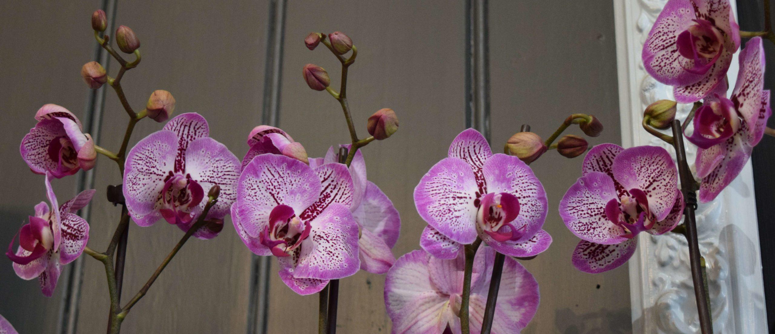 Stem By Stem Orchids