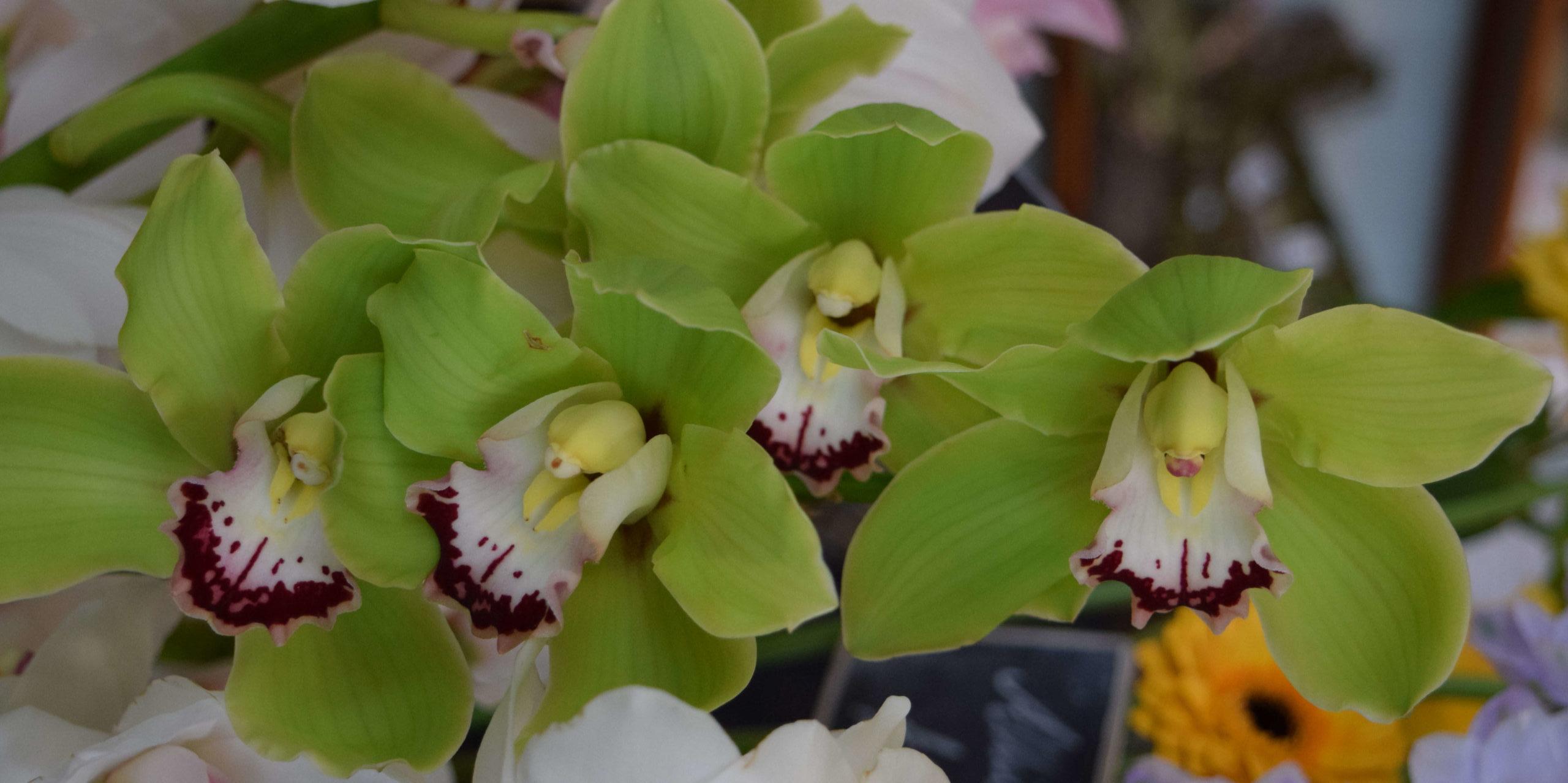 Orchids landscape Stem By Stem