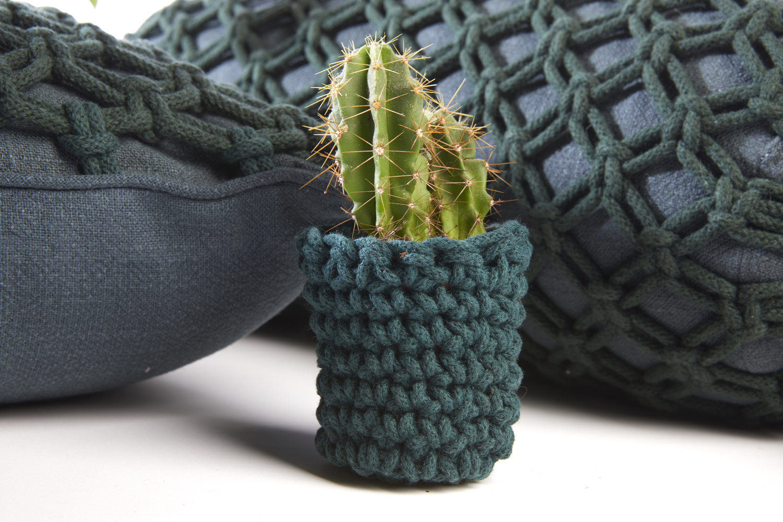 Heather Orr Cactus