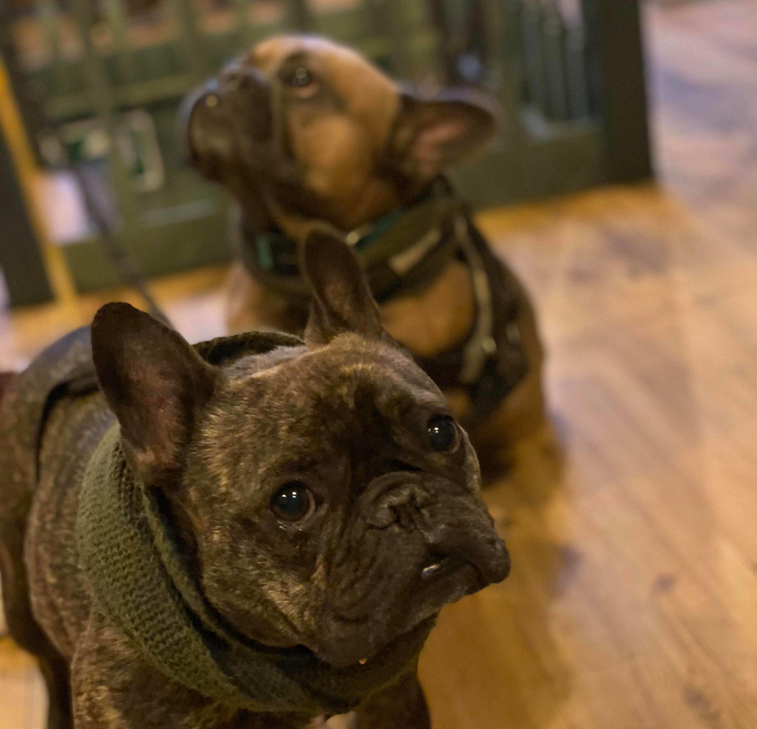 Bouverie Tap Dog Friendly