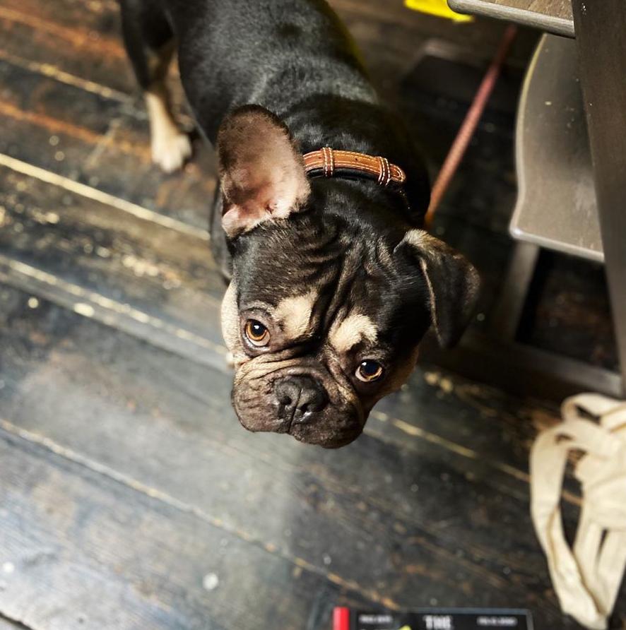 Bruce Hello Hair Dog-Friendly Folkestone
