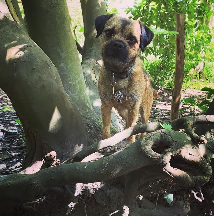 Clovis in woodland dog-friendly Folkestone