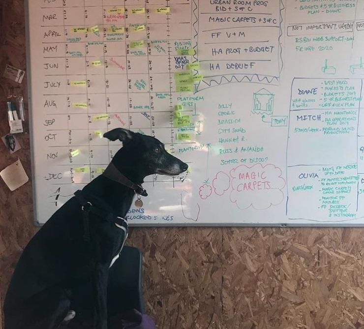 Bo Folkestone Fringe Dog