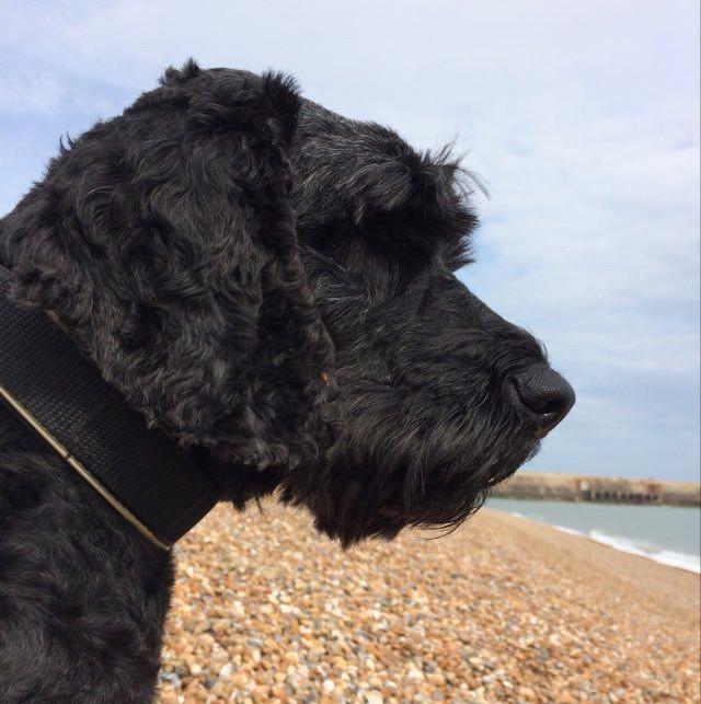 Reilly Harbour Arm Dog Friendly Folkestone