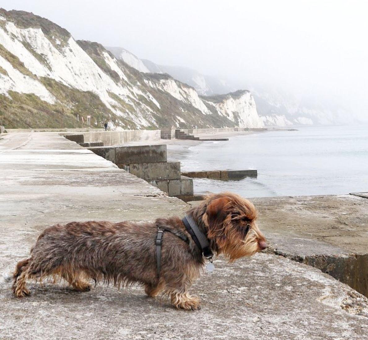 Dog Warren Credit @sullivan_the_sausage