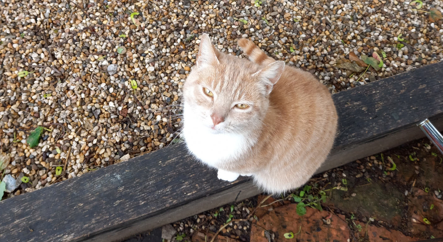 Toby PPCG Cat